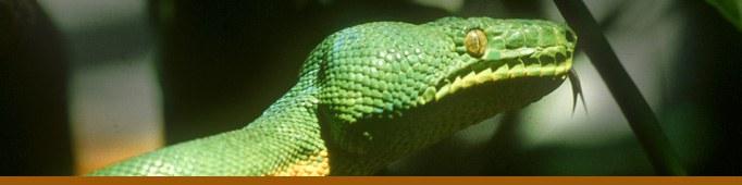Snake Reptile Banner