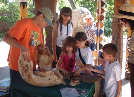 VolunteerZooNGelephant.JPG