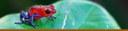 Amphibian Banner