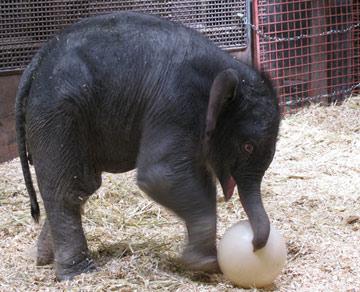 Daisy the elephant