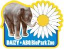 Daizy Patch
