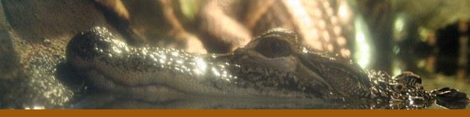 Gator Swamp banner