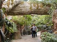 rainforest-1.jpg