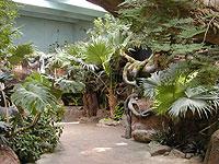 rainforest-2.jpg