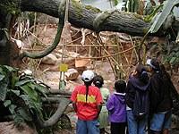 rainforest-5.jpg