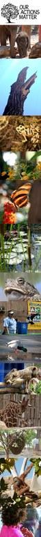 Zoo Birthday Sidebar