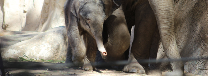 Jazmine the Elephant