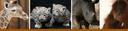 Zoo Baby Banner