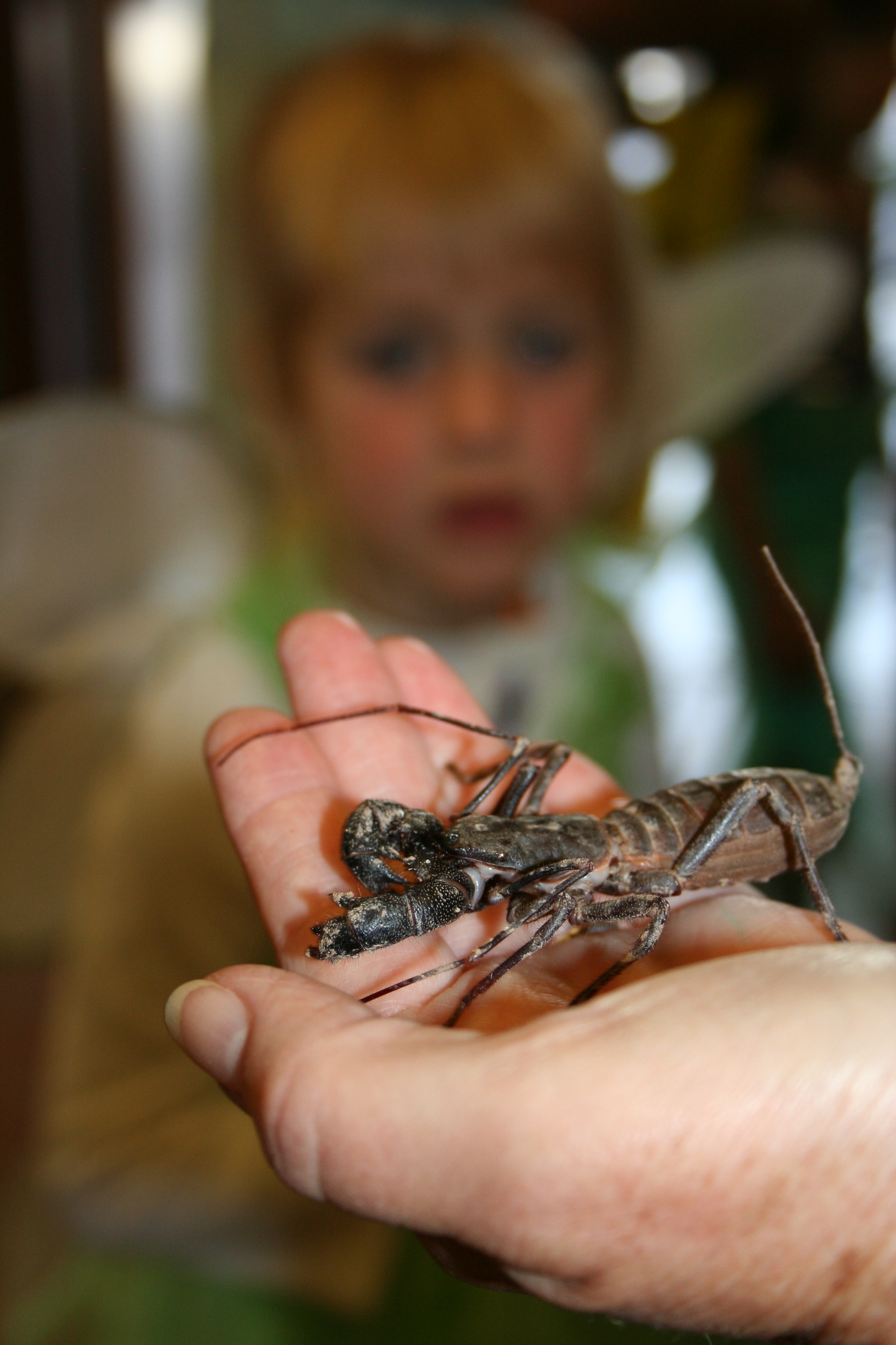 Zoo Boo Whip Scorpion