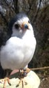 Birds of prey 2