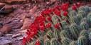 Cactus & Succulent Show
