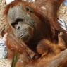 zoo thumbnail