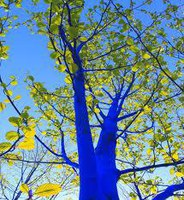 The Blue Tree Project Visits Albuquerque