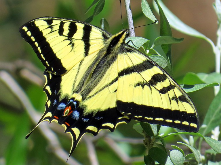 Pollination Celebration: All About Pollinators for Kids!