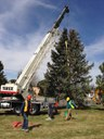 Moving the Blue Spruce @ Academy Hills Park