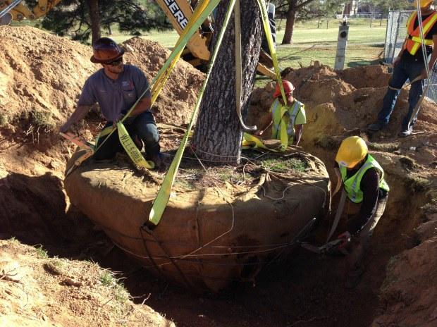 Moving a Treet @ Academy Hills Park