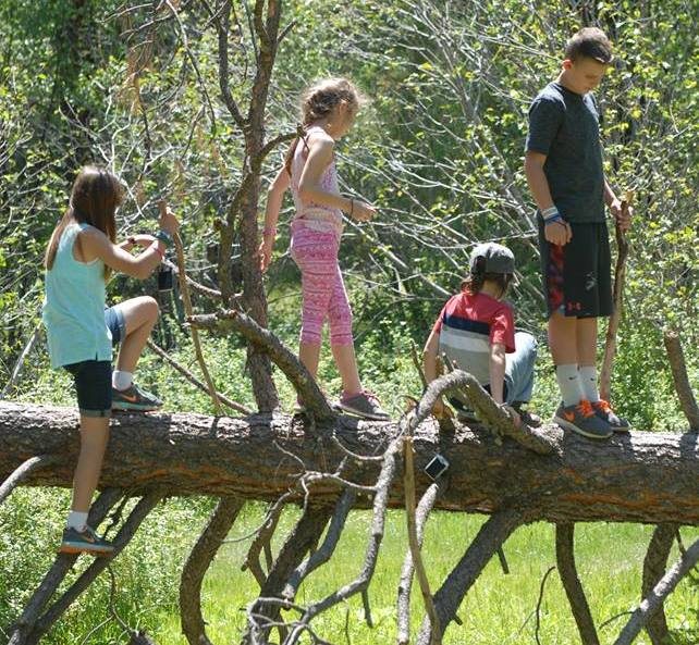 Children standing on a fallen tree.