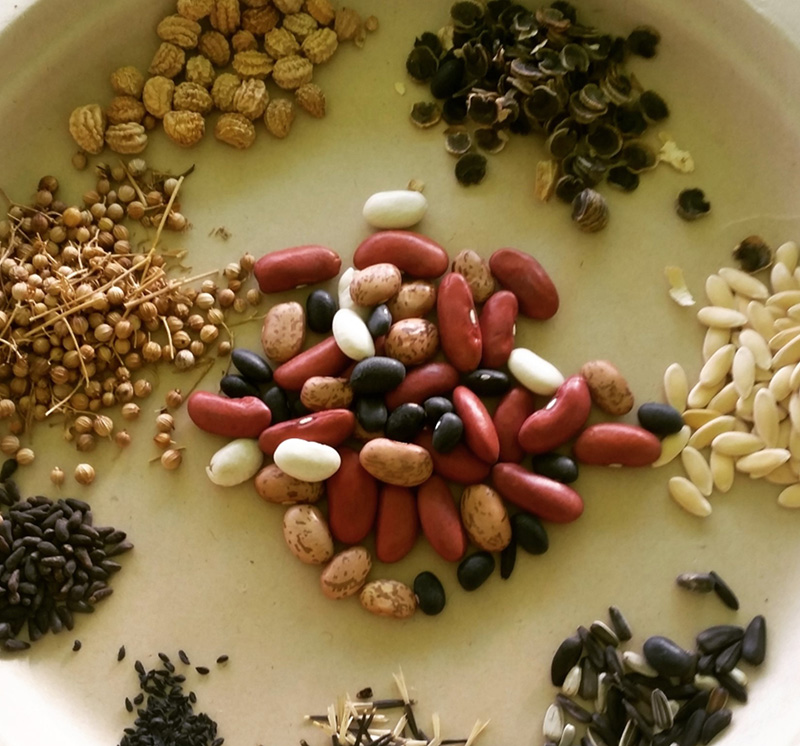 Various seeds arranged on a plate.