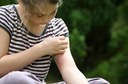 Mosquito Spraying