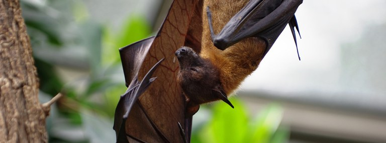 UBD - Bats