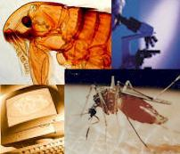 Environmental Disease Prevention