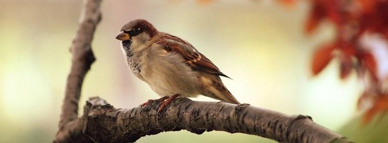 UBD - Birds