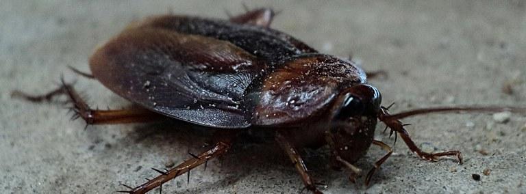 UBD - Cockroaches