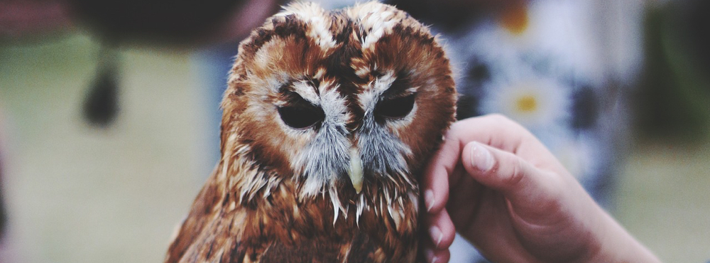 UBD - Common Wildlife and How to Respond