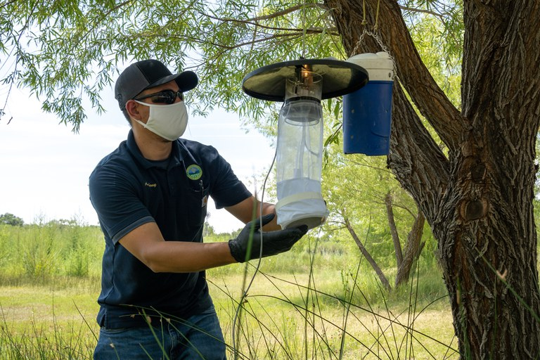 Mosquito trapping