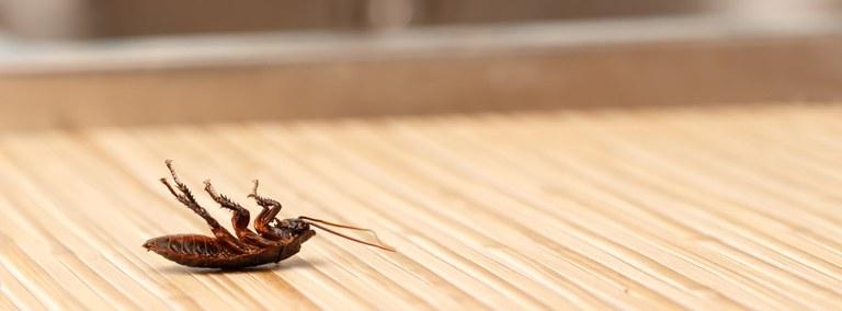 UBD - Integrated Pest Management