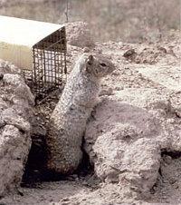 Squirrel & Cage