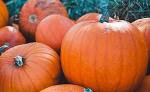 Enjoy the pumpkin picking this fall.