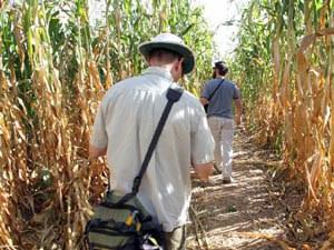 Maze Maize Path