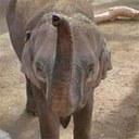 Rozie the Elephant