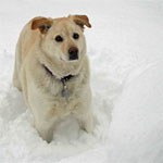 Dog in Snow by L. Heineman - Small