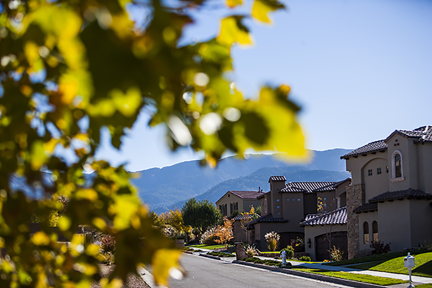 A photo of an Albuquerque neighborhood street with a tree in the foreground.