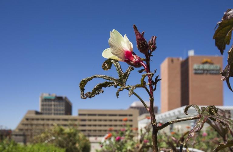 A roof garden view of Downtown Albuquerque