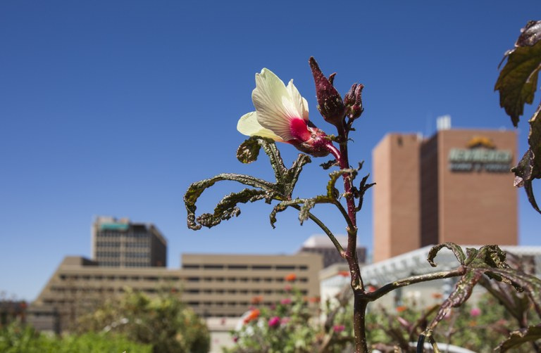 A roof garden view of Downtown Albuquerque