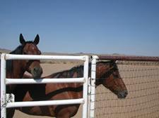 Boca Negra Horses