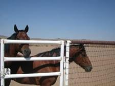 Boca Negra Horse