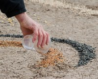 pouring seeds for open space mandala