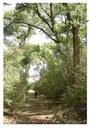 Rio Grane Restoration