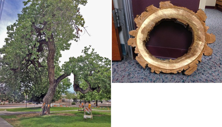 Robinson Park Tree Before