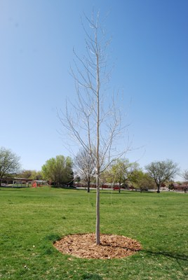 Snow Park Tribute Tree (West)