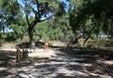 Paseo Del Bosque Trail Alameda