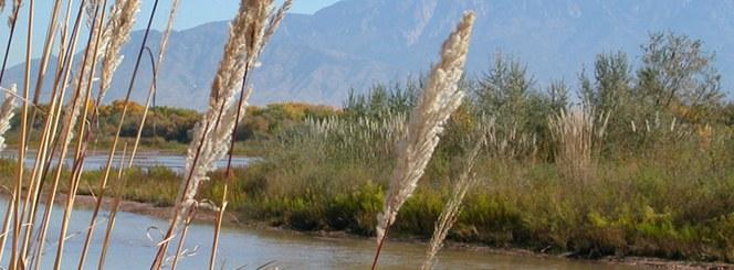 Bosque river