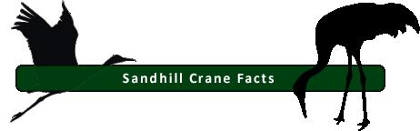 OSVC Crane facts