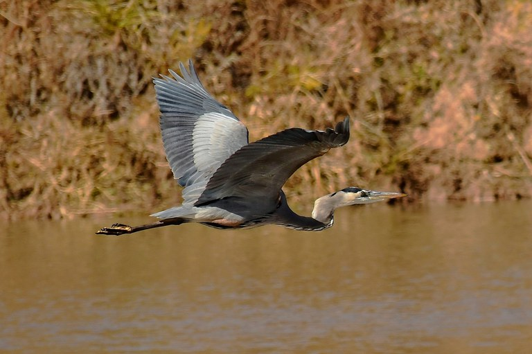 OSVC Cranes bosque