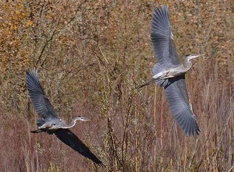 Cranes along the bosque