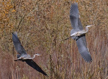 OSVC Cranes bosque 2